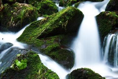 creek-21749
